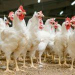 Zarządzenie środków związanych z wystąpieniem wysoce zjadliwej grypy ptaków.